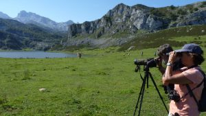 Observando fauna en los Lagos de Covadonga
