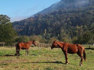 hotel ecologico sostenible con caballos
