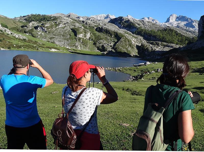 Birdwatch Asturias - observación de fauna