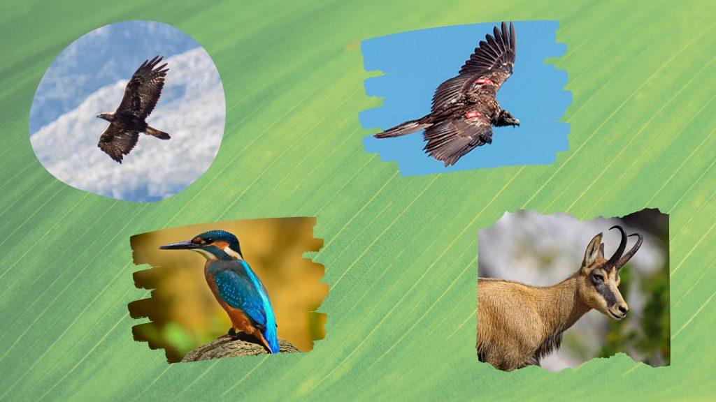 Fauna en el Oriente de Asturias